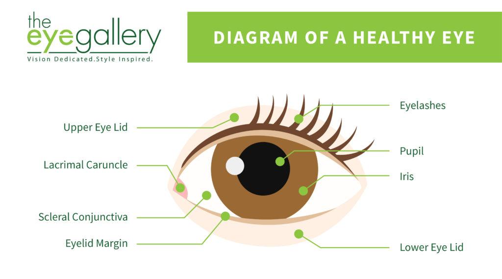 Waterline Eye Diagram